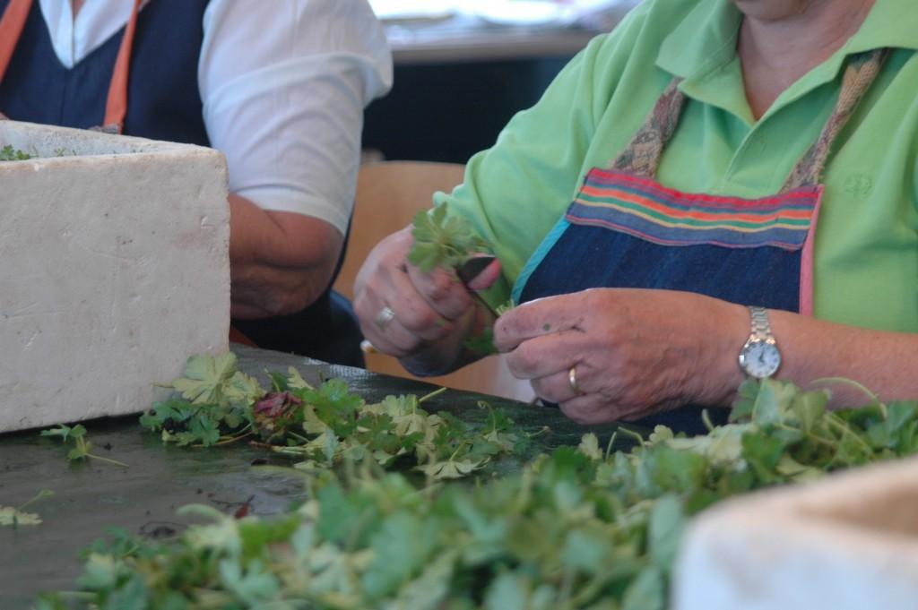 Planten stekken | Aaldering de Stek